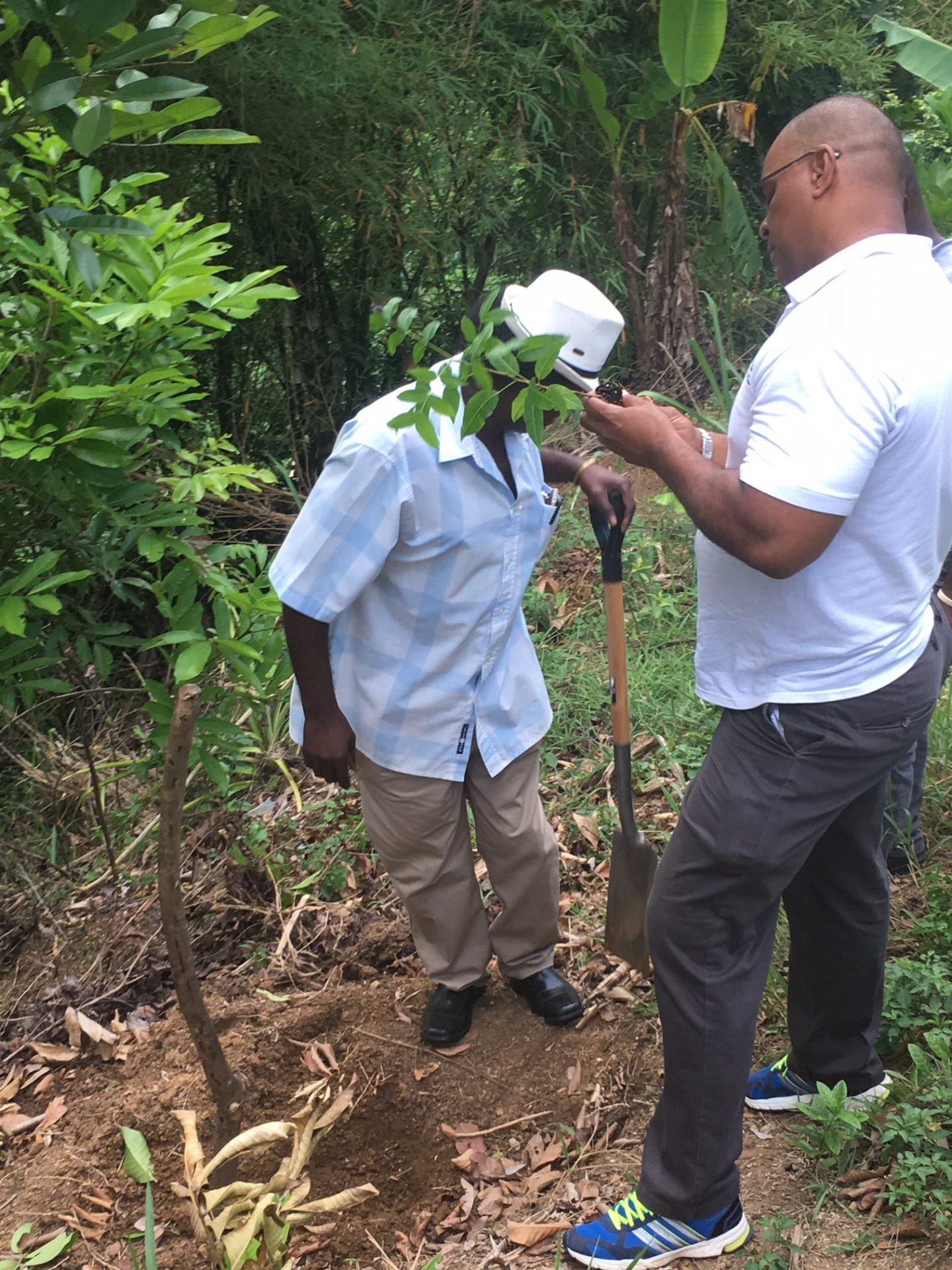 Reforesting the degraded Upper Rio Minho Watershed in Clarendon