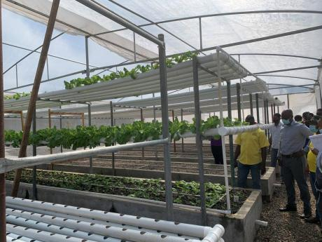 Earth Today | Aquaponics taking off at College of Agriculture, Science and Education